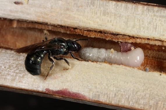 A rovar és a báb